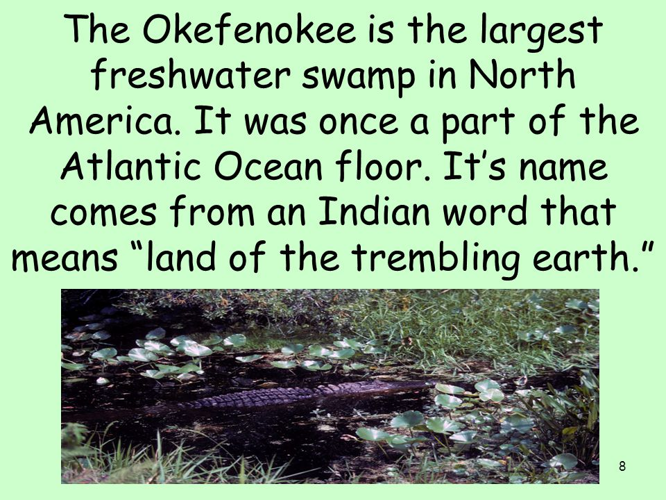 The Okefenokee is the largest freshwater swamp in North America