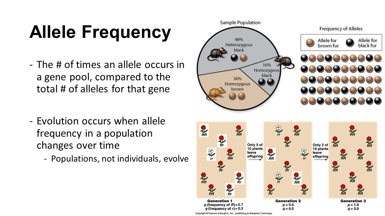 how to find frequency of allele