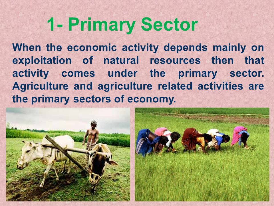sector of economic activities The sectoral policies department (sector) promotes decent work by addressing social and labour issues in specific economic sectors, both at international and national levels by tackling challenges and development issues of great importance for specific sectors, the international labour organization.