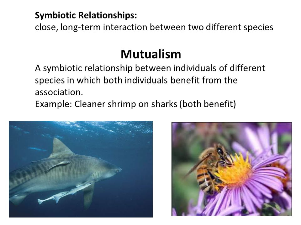 a long term relationship between two species