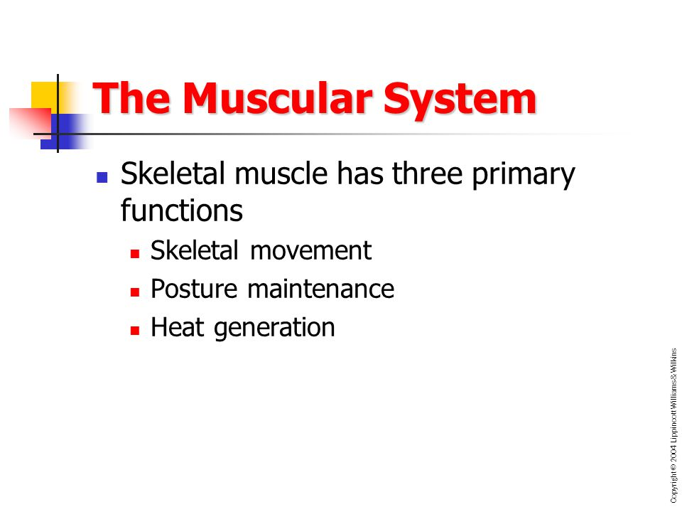 the three main types of muscles in the muscular system Main article: muscle there are three distinct types of muscles: skeletal muscles, cardiac or heart muscles, and smooth (non-striated).