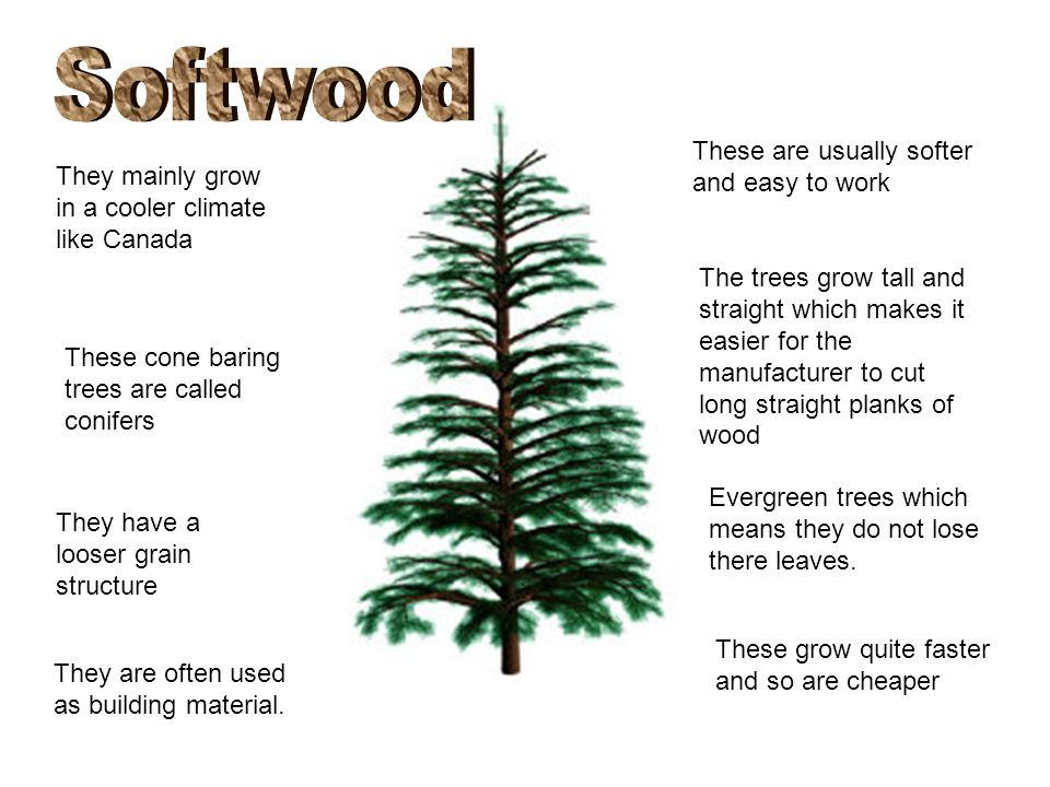 Hardwood And Softwood Trees ~ Softwoods hardwoods and manufactured boards ppt video