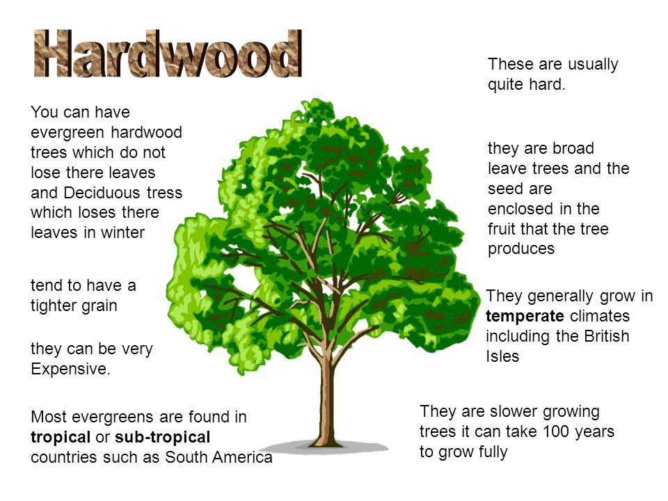 hardwoods and softwoods Start studying woods, hardwoods and softwoods learn vocabulary, terms, and more with flashcards, games, and other study tools.