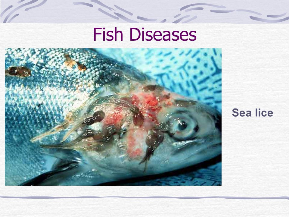 Pros and cons of aquaculture ppt download for Fish diseases pictures