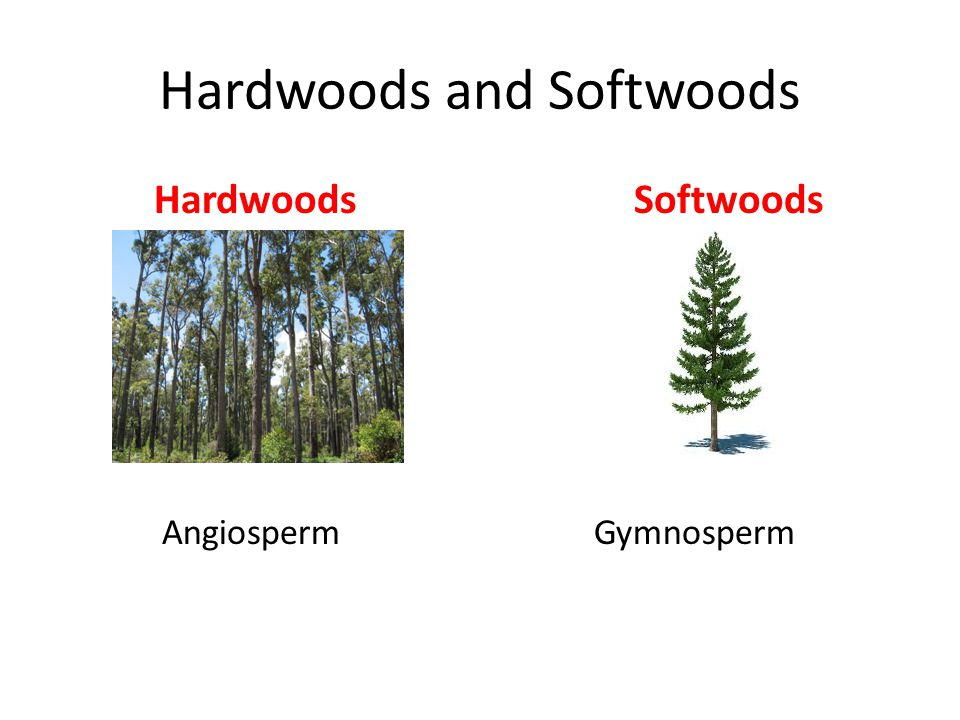 Hardwood Softwood Chart ~ List of synonyms and antonyms the word hardwoods