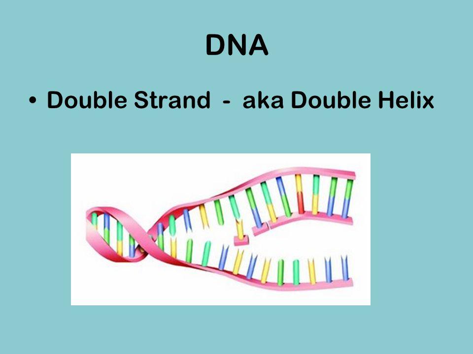 DNA Double Strand - aka Double Helix