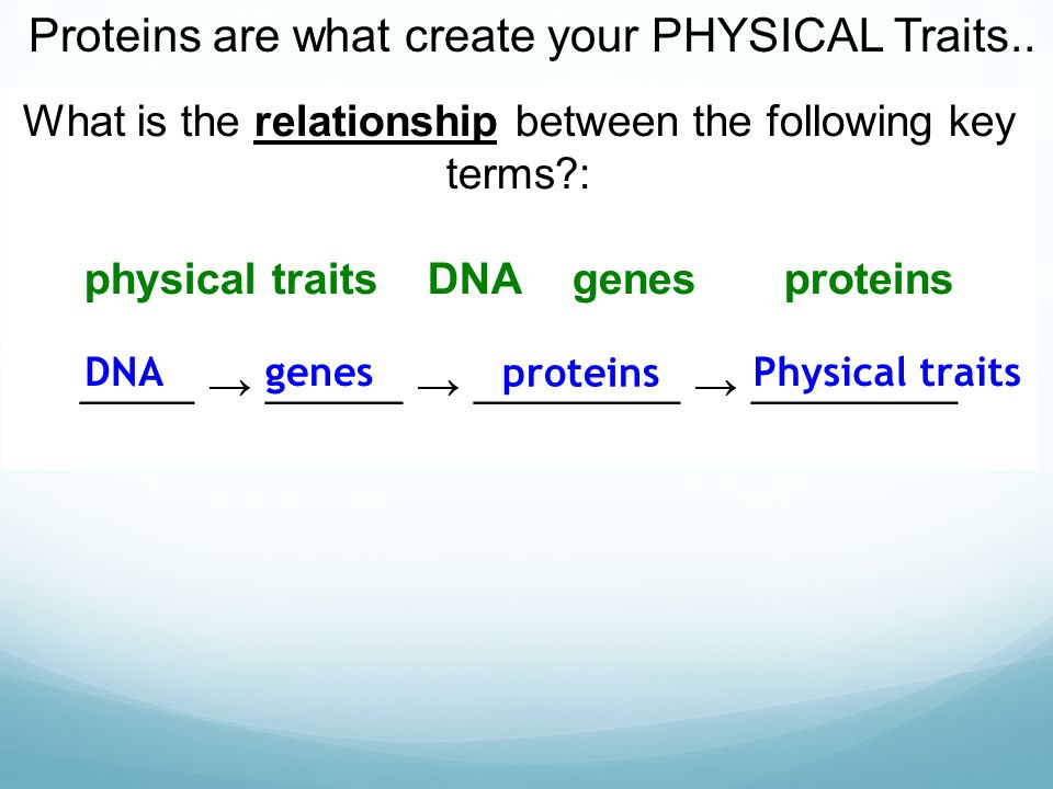 what is the relationship between genes and biological traits