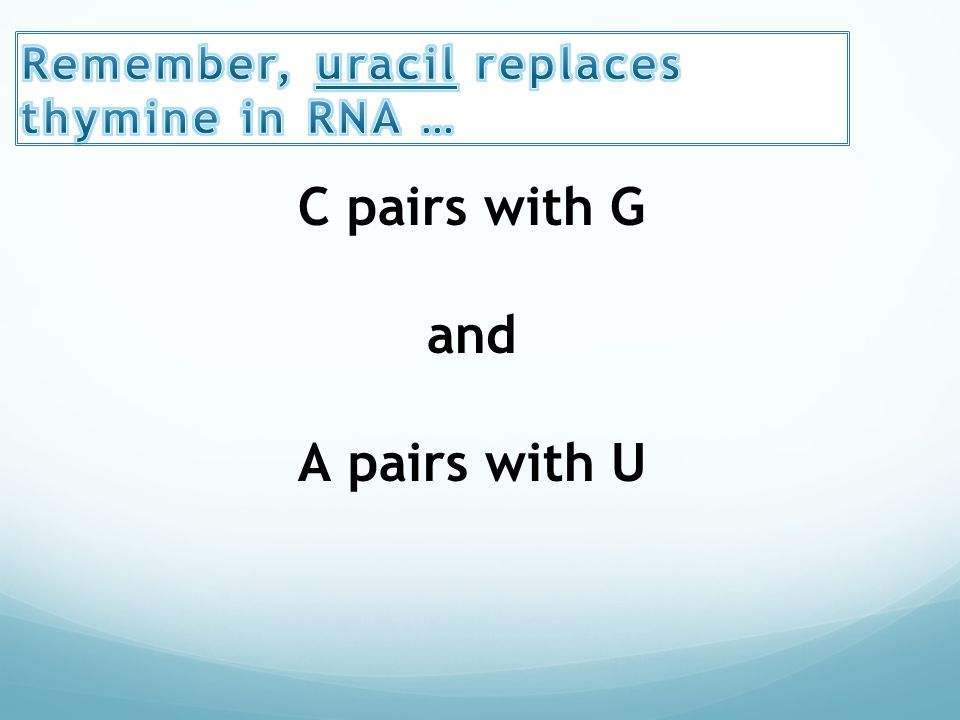 relationship between adenine thymine guanine cytosine uracil