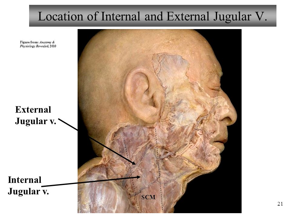 Location of Internal and External Jugular V.