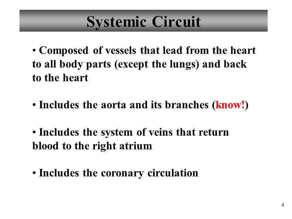 Systemic Circuit Composed of vessels that lead from the heart to all body parts (except the lungs) and back to the heart.