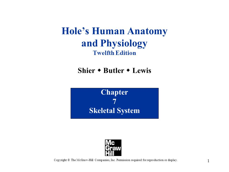 Chapter 7 Skeletal System - ppt video online download