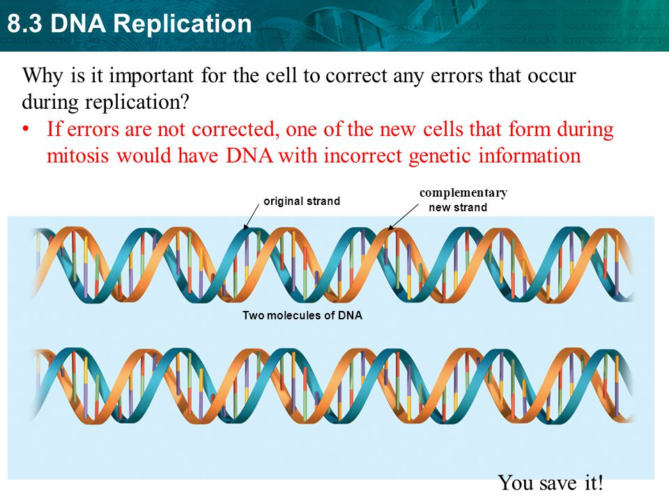 24 explain how dna serves as its own template during for Explain how dna serves as its own template during replication