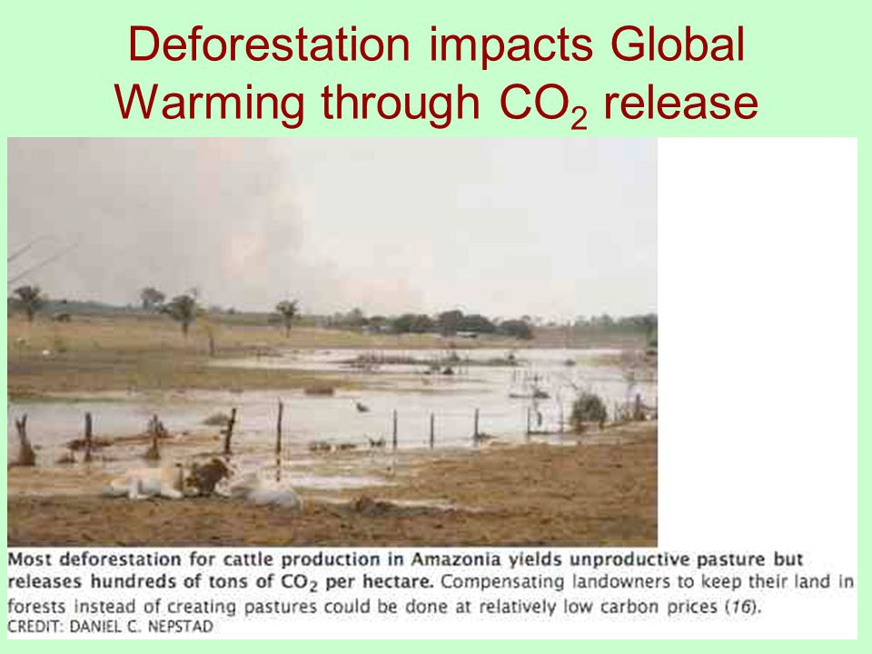 Tropical Deforestation and Global Warming