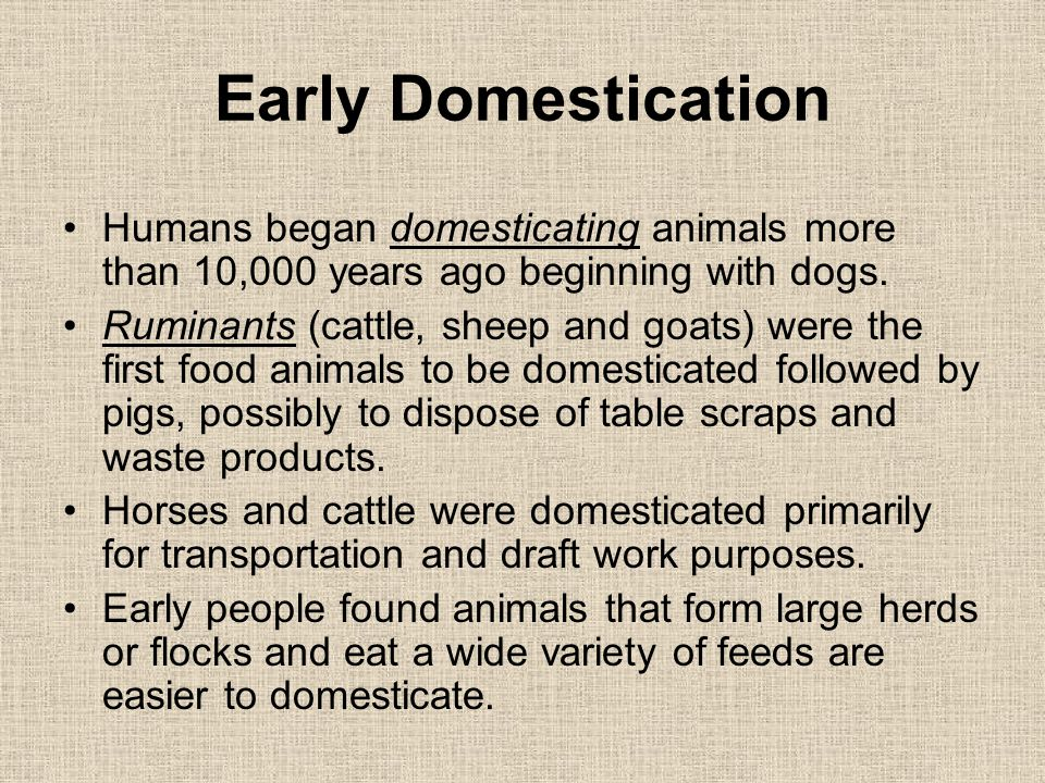 a history on the early forms of dog domestication In this study, the origins of american dogs were addressed by comparison of   analyses reveal a rich history underlying dog domestication.