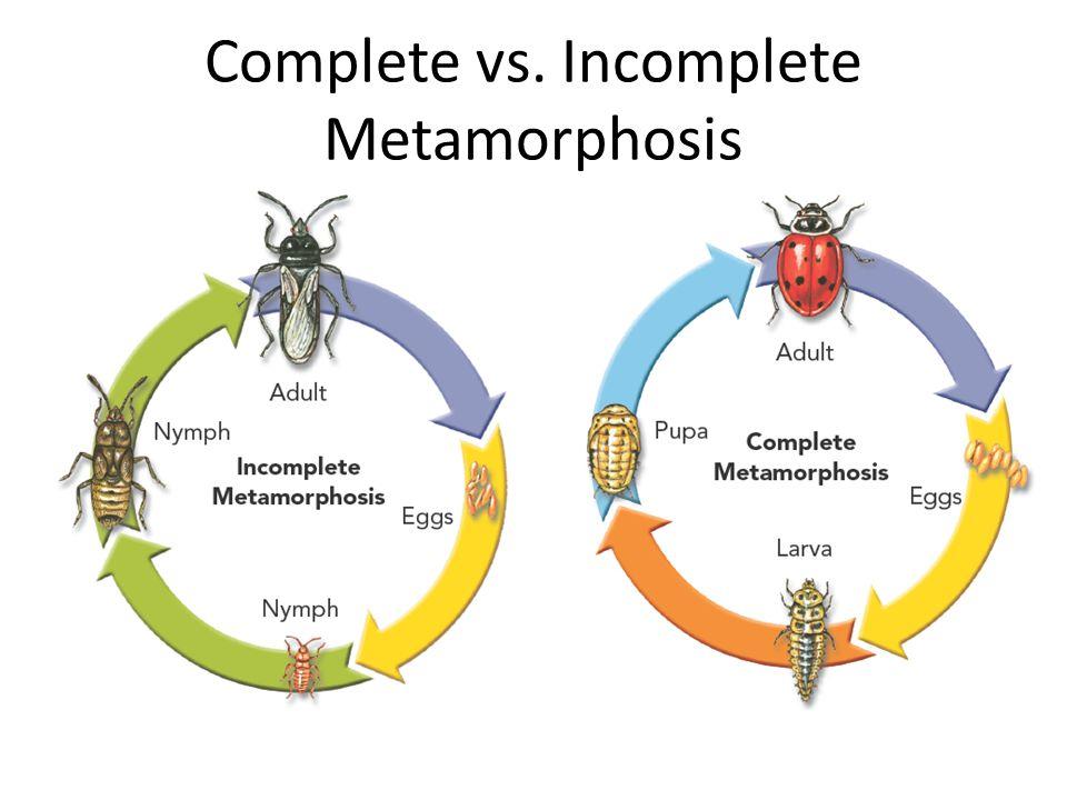Animals Directions Week 7 Prepare your desk for science ppt – Metamorphosis Worksheet