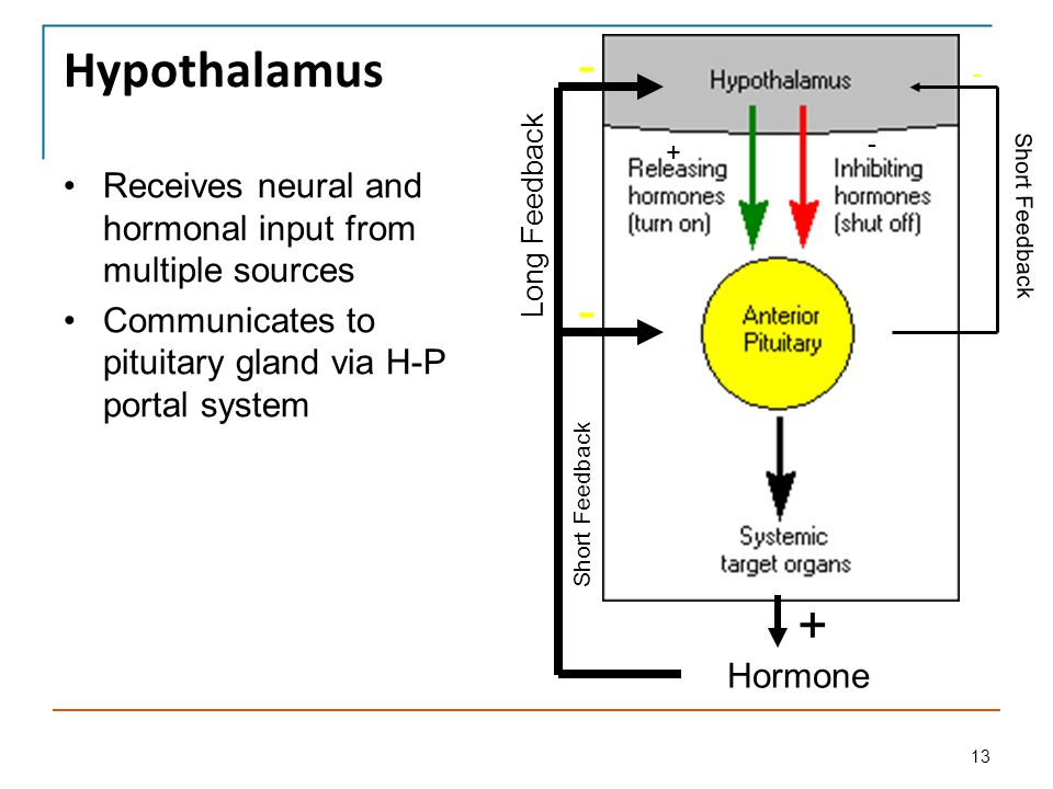 Pituitary and hypothalamic physiology ppt video online for H portal
