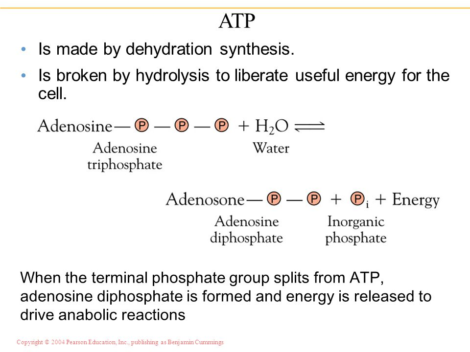 coupling of catabolic and anabolic reactions
