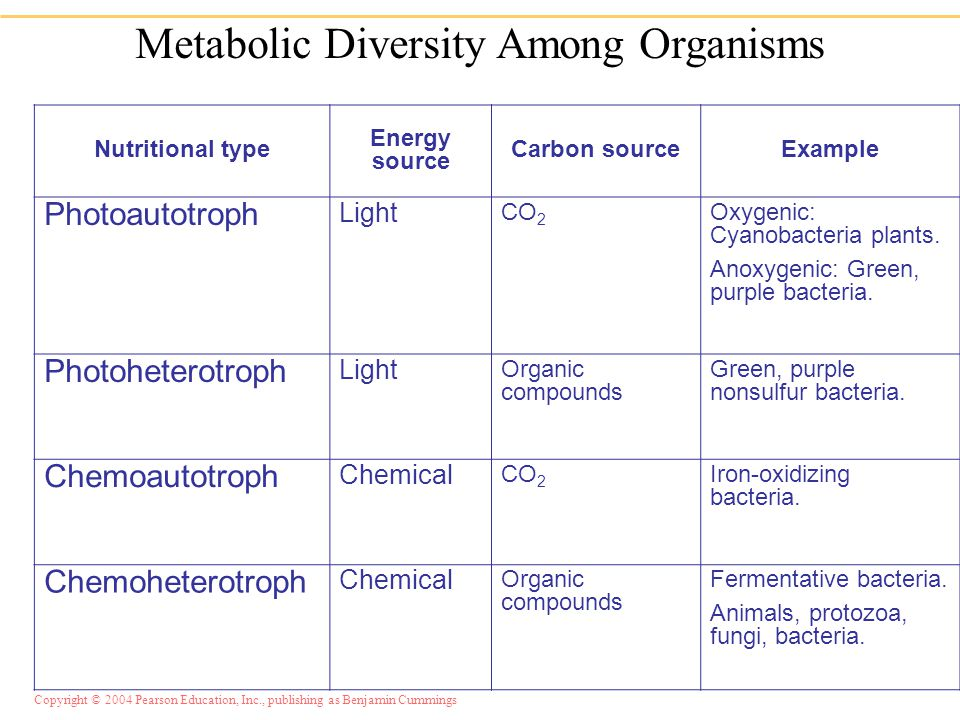 Chapter 5 Microbial Metabolism.