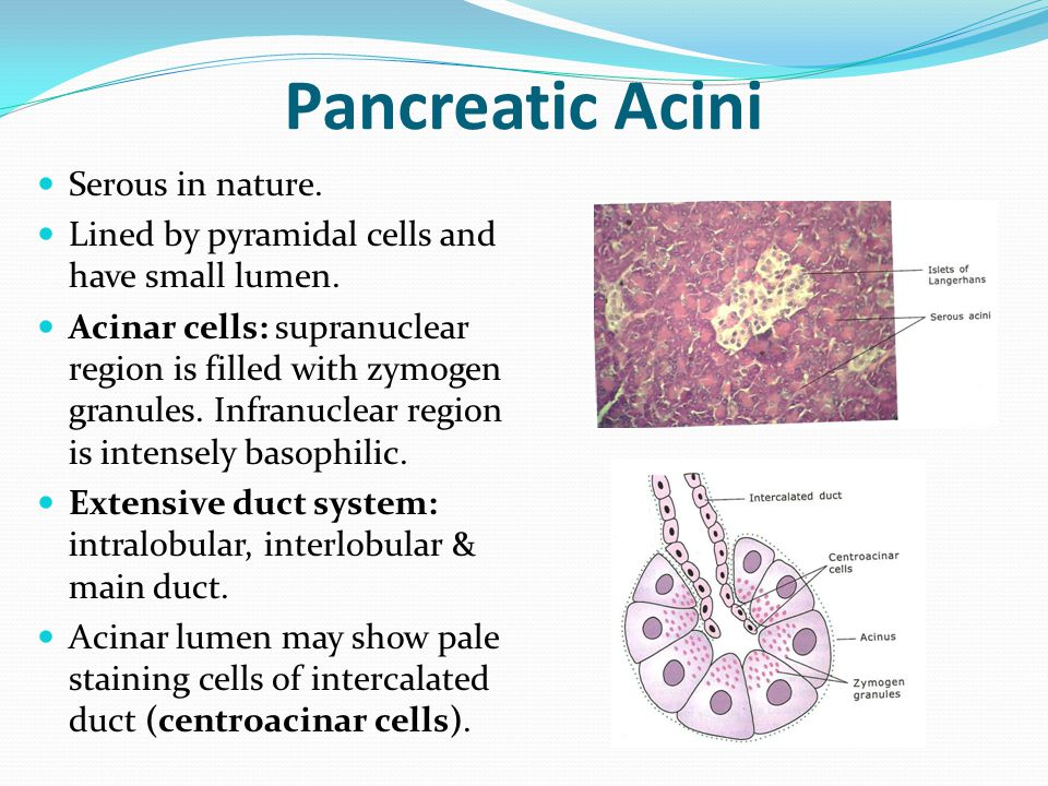 Histology Of Tongue Liver Pancreas Ppt Video Online Download