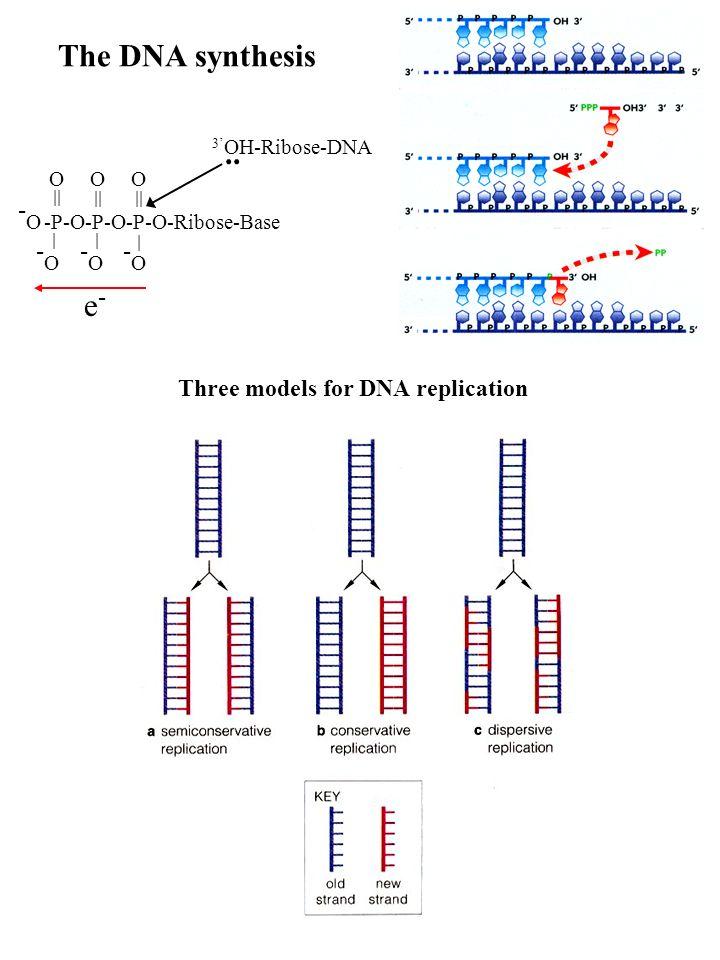 -O -O -O -O The DNA synthesis .. e- Three models for DNA replication