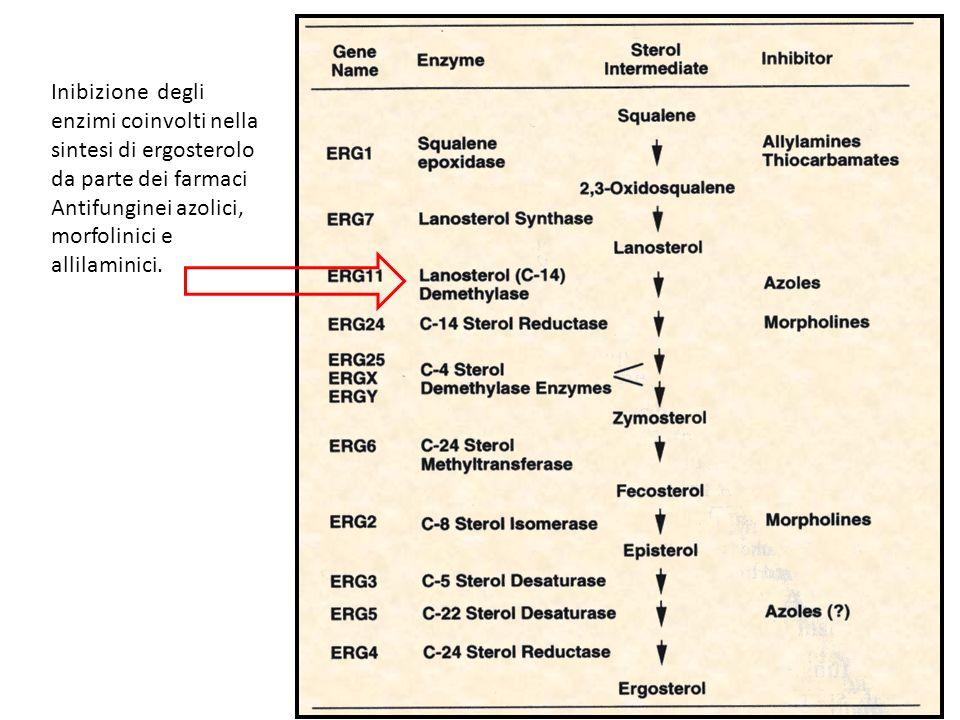 Inibizione degli enzimi coinvolti nella. sintesi di ergosterolo.