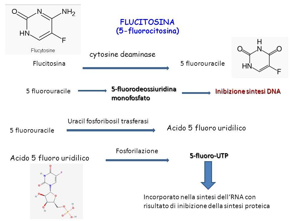 FLUCITOSINA (5-fluorocitosina)