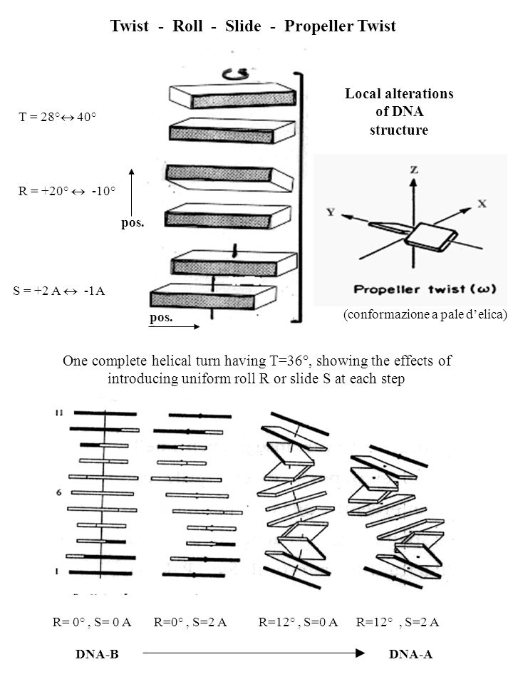 Local alterations of DNA structure