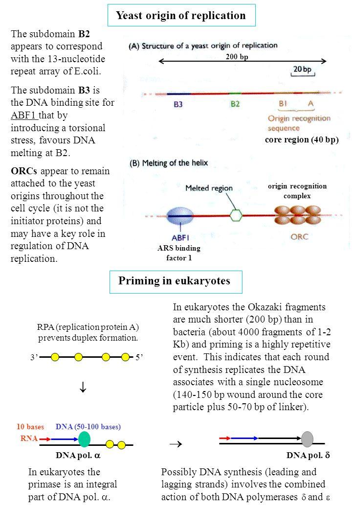 origin recognition complex