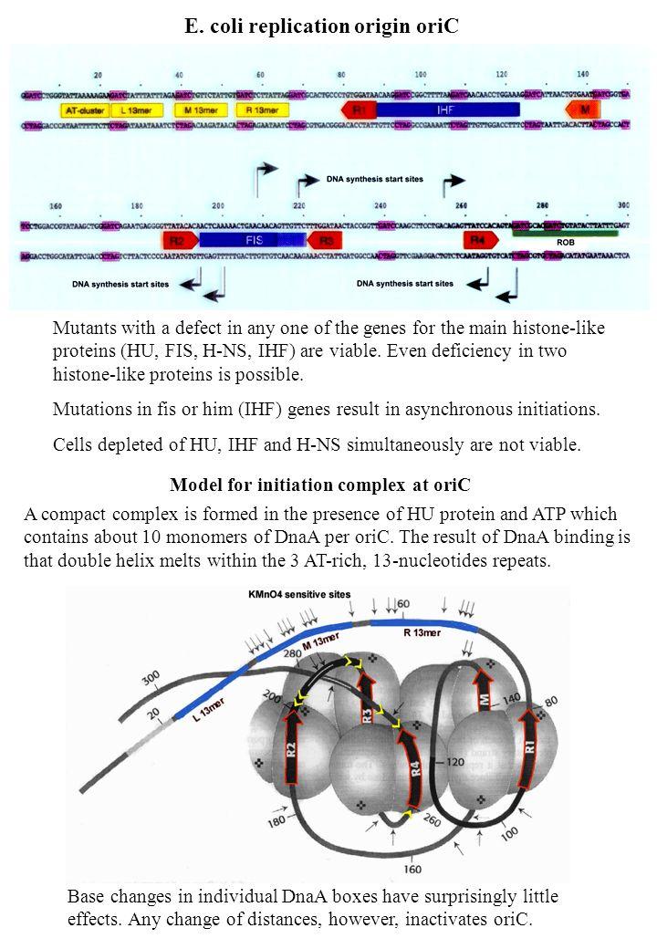 E. coli replication origin oriC
