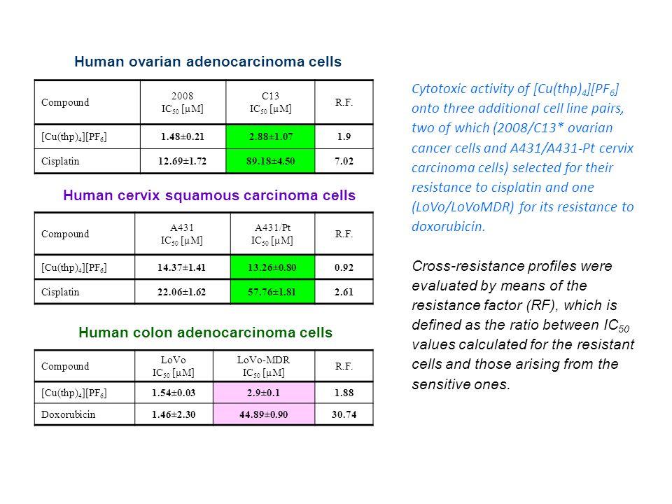 Human cervix squamous carcinoma cells Human colon adenocarcinoma cells