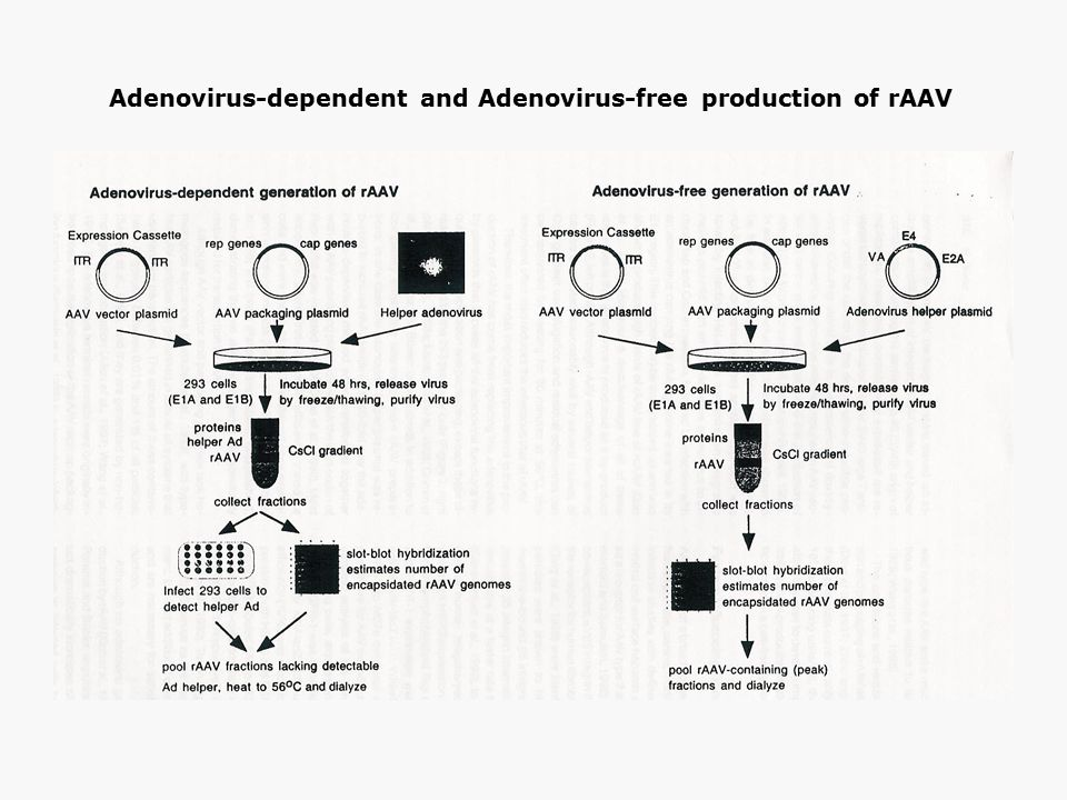 Adenovirus-dependent and Adenovirus-free production of rAAV