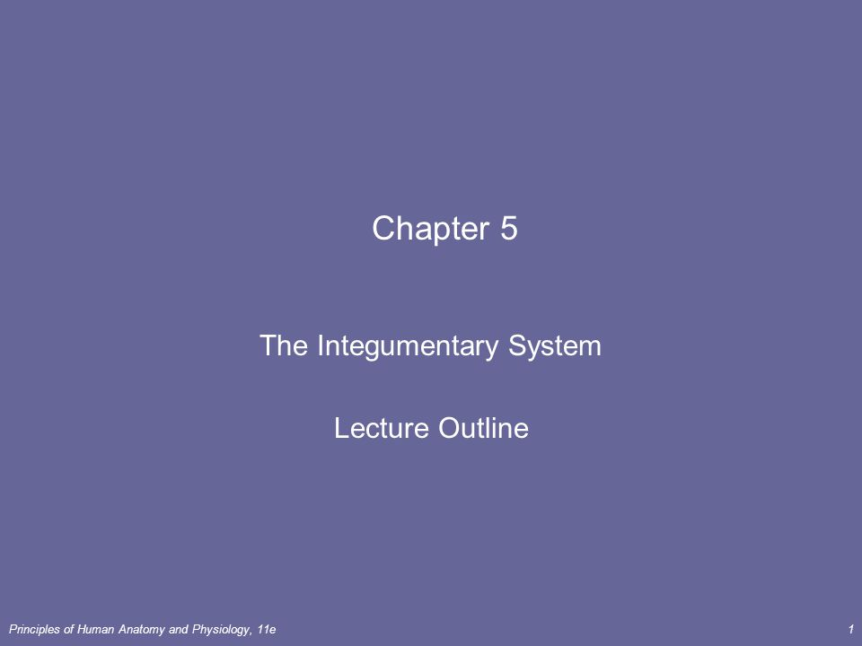 The Integumentary System Lecture Outline
