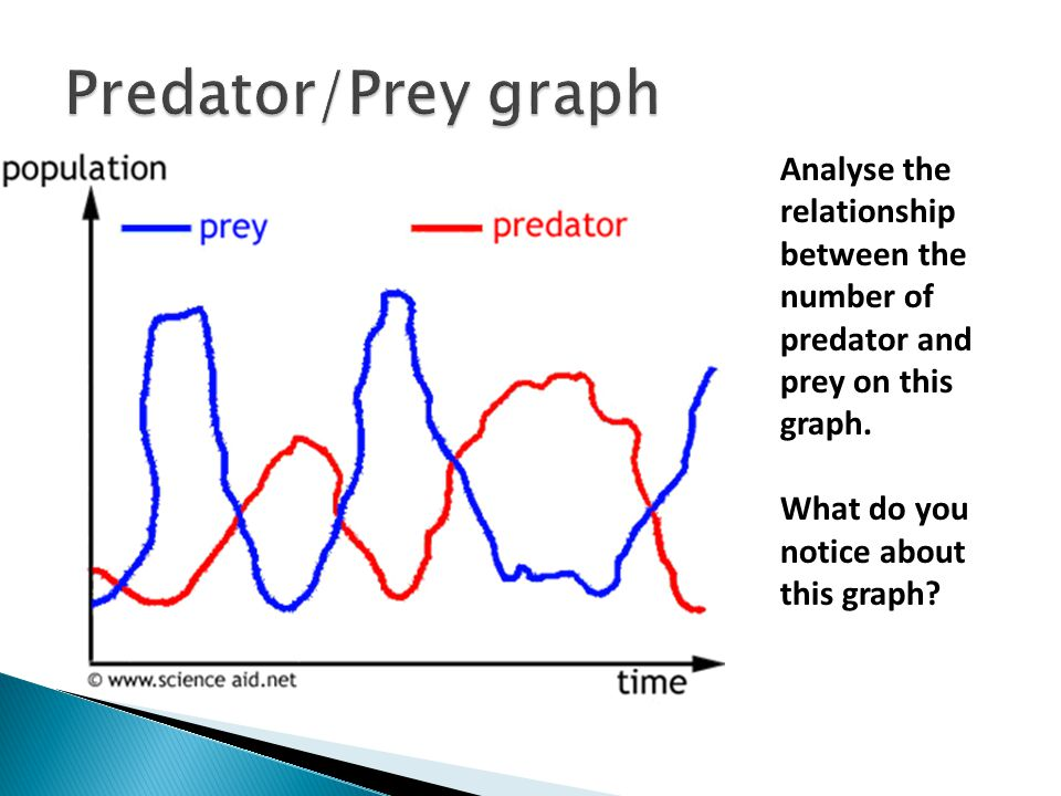 the four hypotheses explaining the effects of wolf predation on prey population Within those it is possible to divide the aims of the manuscripts into four focal aims: (1) to characterize the role of perceived predation risk on habitat use by wild and captive populations, (2) to project top-down trophic effects, (3) to understand how habitat complexity affects demographic and behavioral dynamics within populations and (4.