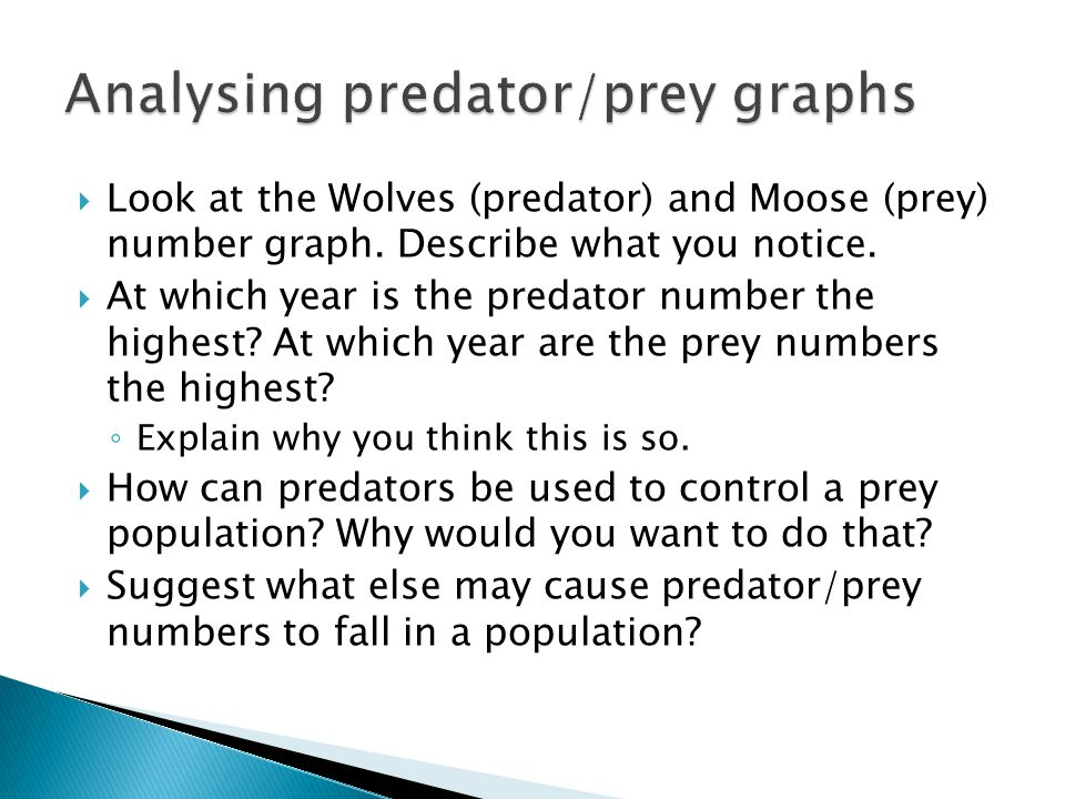 the effects of wolf predation on prey populations of large ungulates Lynx and wolves prey upon all age classes throughout the year, even though   moreover, as both carnivore and ungulate populations in scandinavia are  no  significant predator numerical response to fluctuations of prey densities is  allowed.