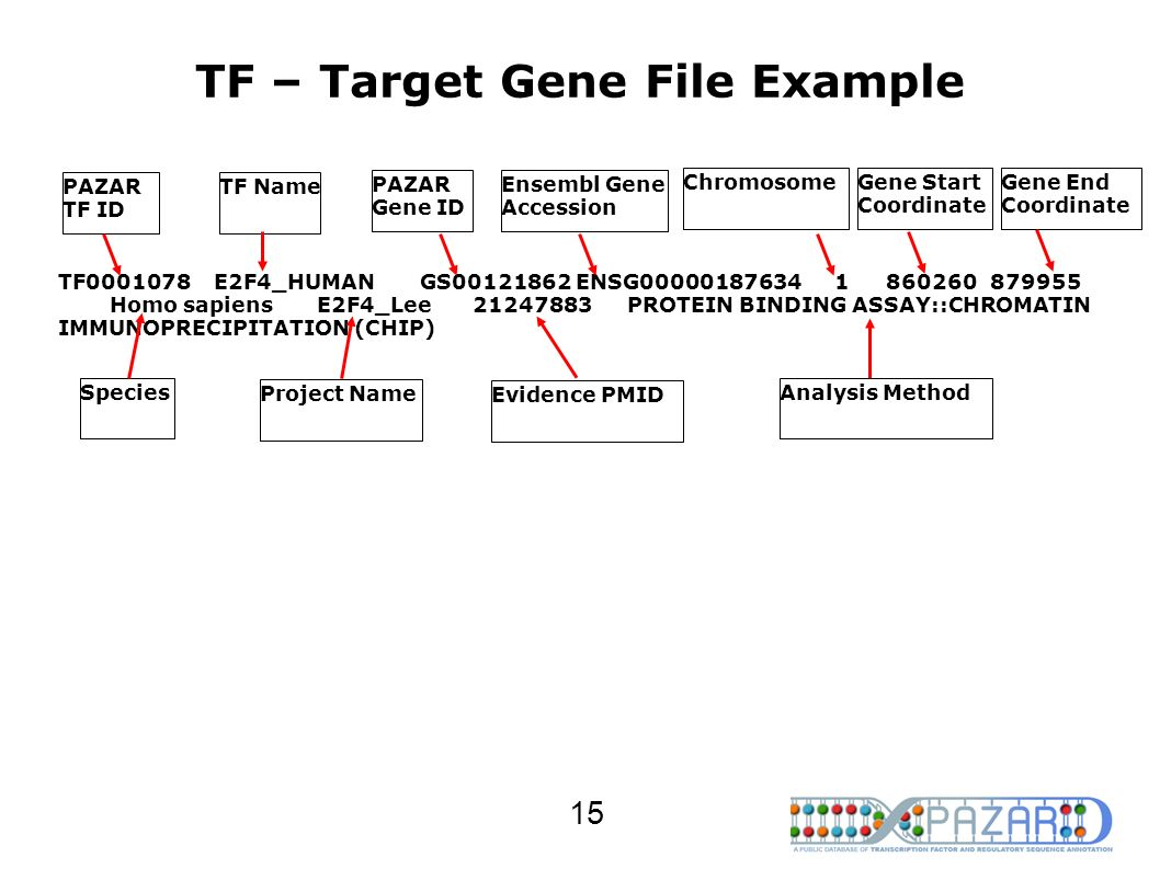 TF – Target Gene File Example