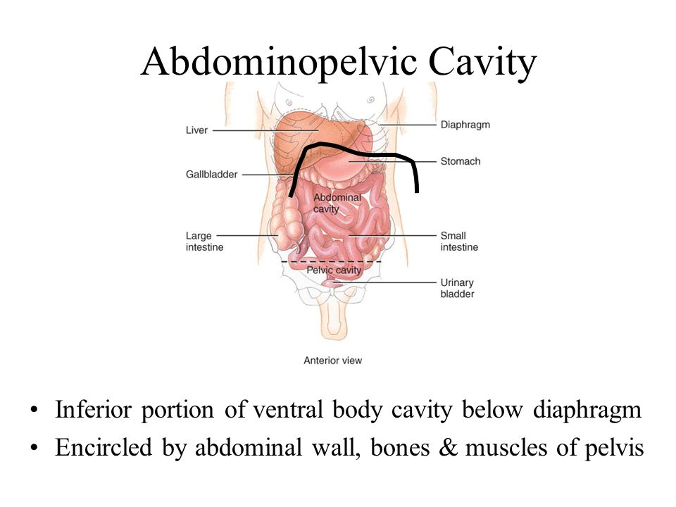Anatomy & Physiology = study of characteristics - ppt ...