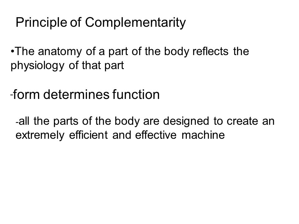 Nett Principle Of Complementarity Anatomy And Physiology Fotos ...