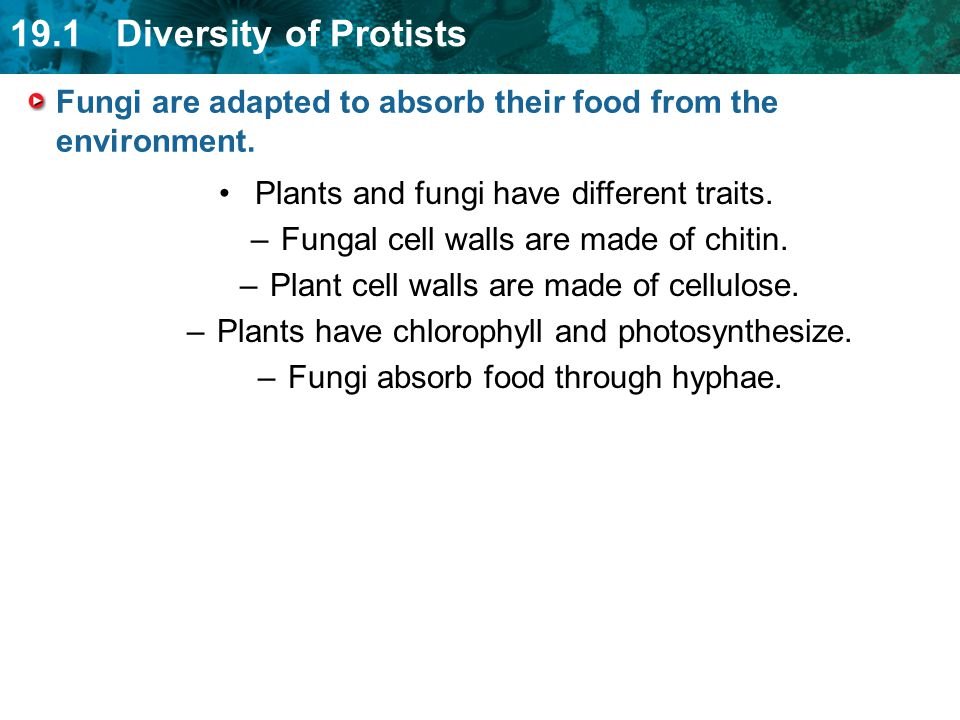 Fungi are adapted to absorb their food from the environment.