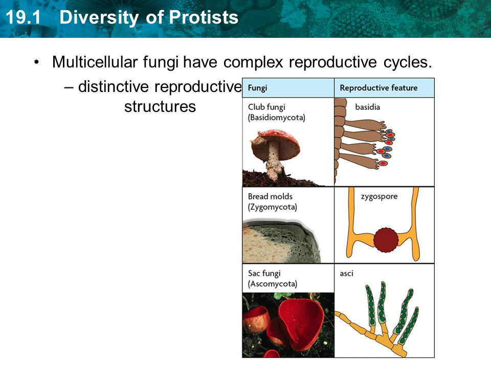 distinctive reproductive structures