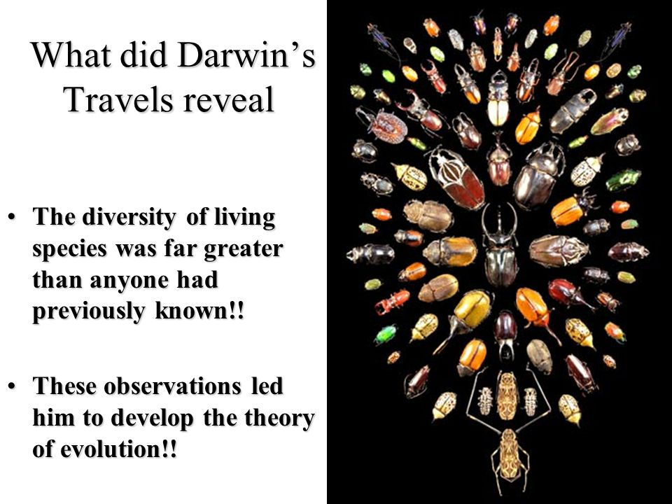 How Did Lamarck S Theory Influenced Darwin S Idea Of Natural Selection