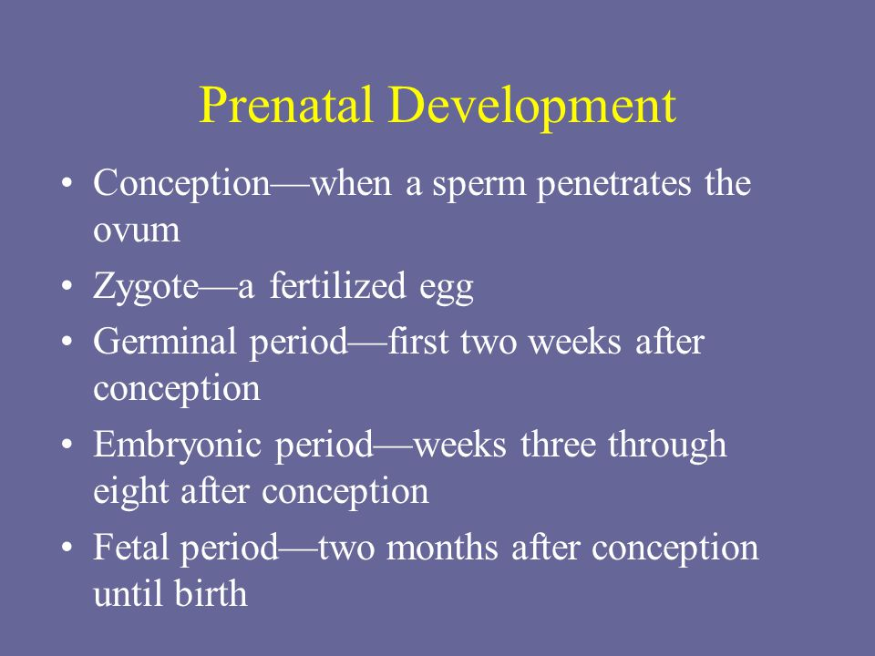 Lifespan Development Ppt Video Online Download