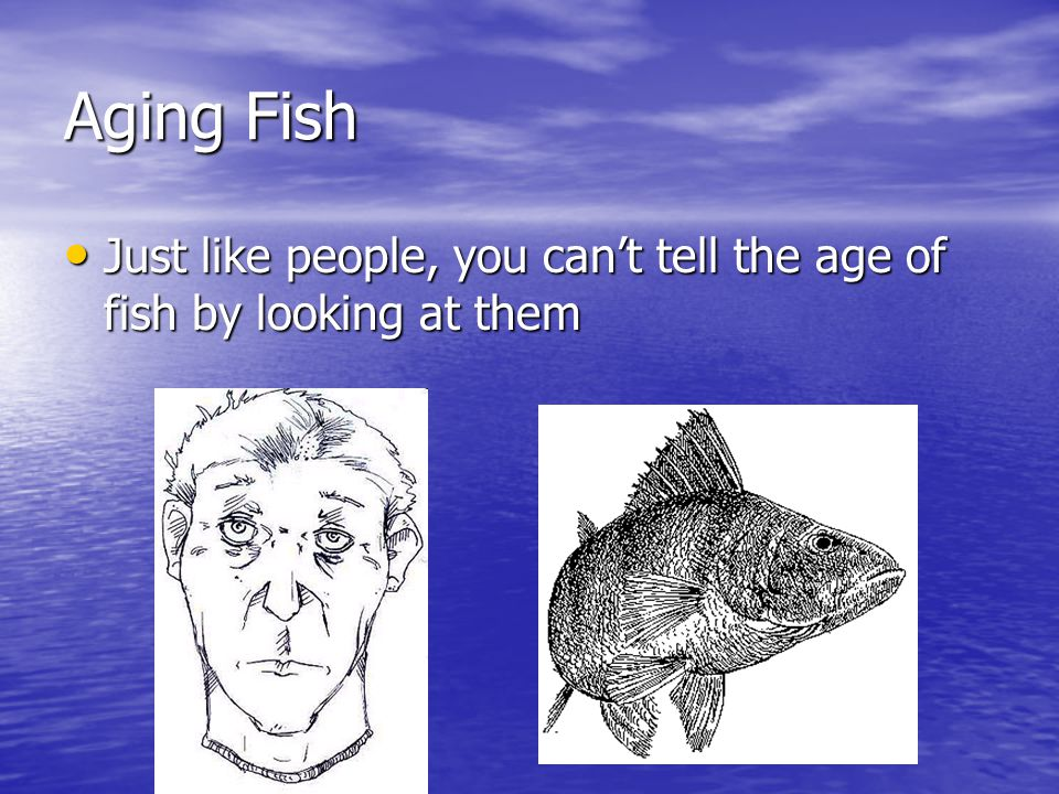 how to tell a fish age