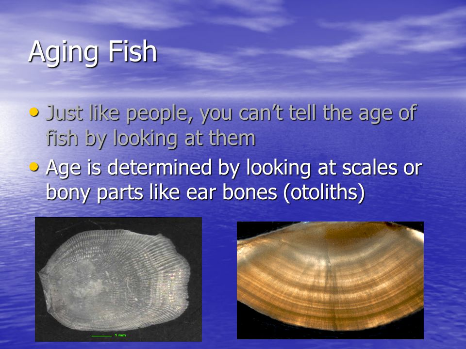 how to tell the age of a fish