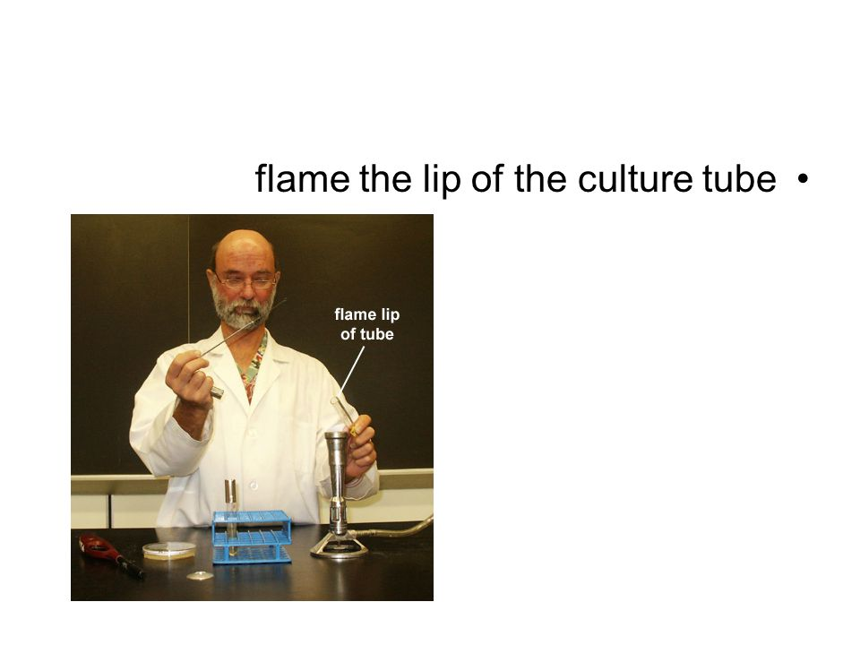 flame the lip of the culture tube