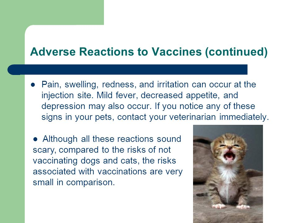 Adverse Reactions TO Vaccinating Animals | Brookfield, WI