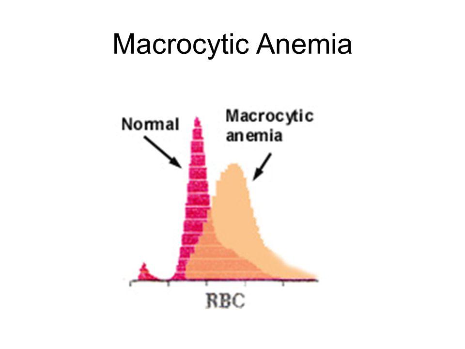 Macrocytic Anemia