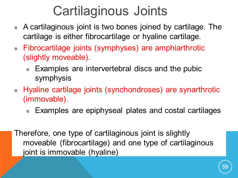 Joints and fractures. - ppt download