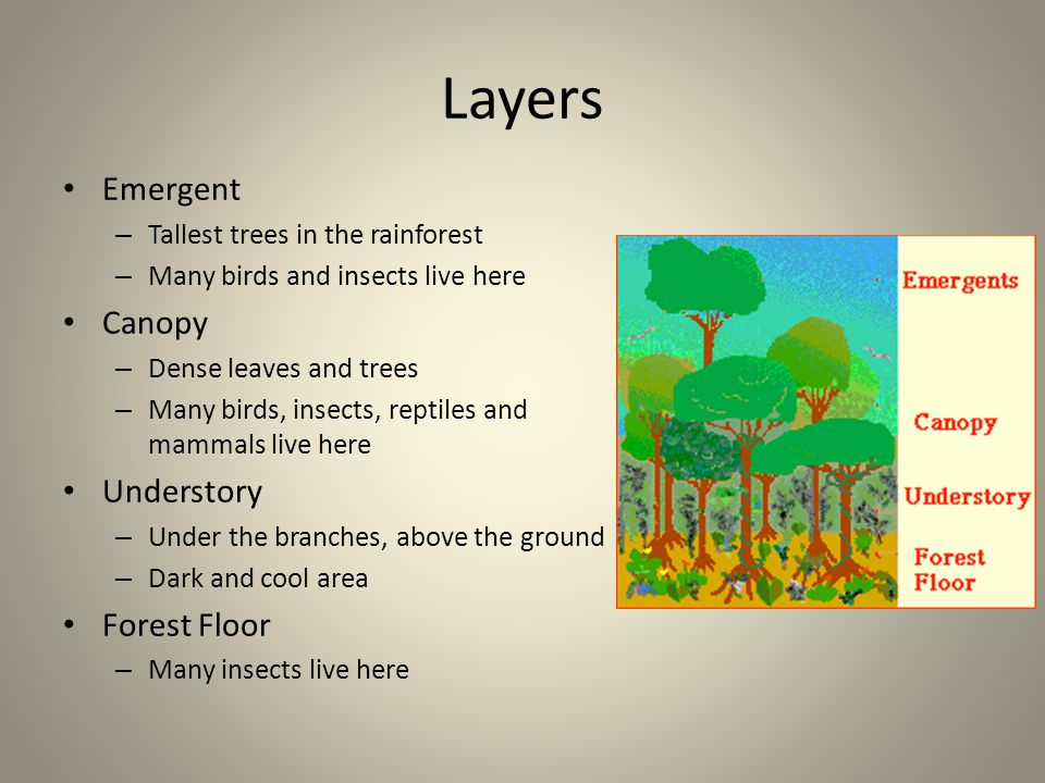 climate location rainfall ppt video online download