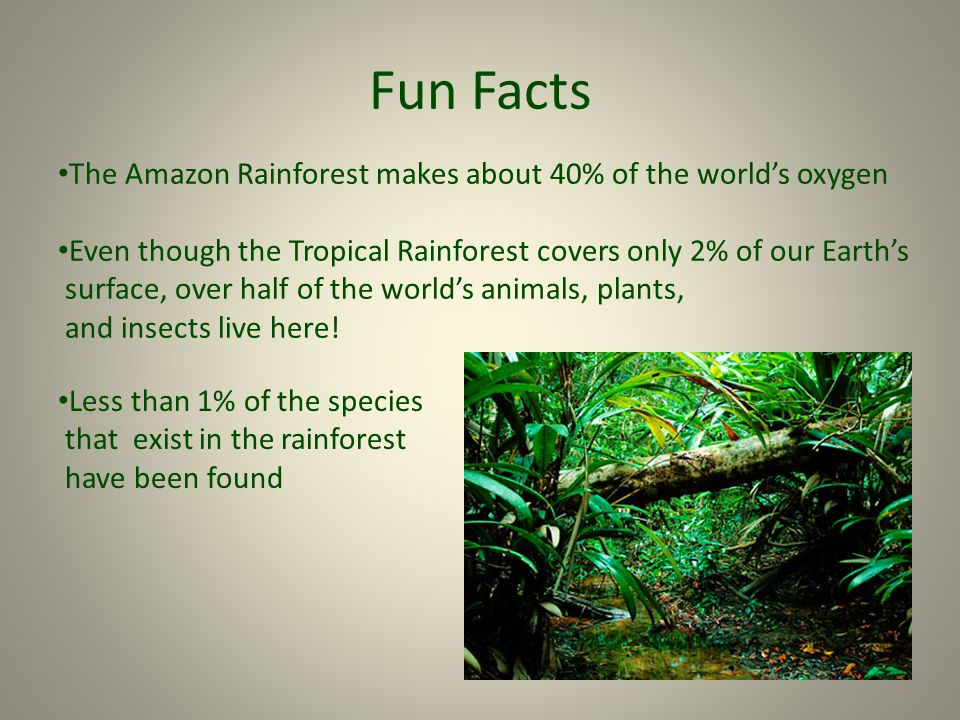 an information about my home the rainforest Animals of the tropical rainforest rainforests are home to organisms big and small, due to their consistent warm temperatures, ample amounts of moisture, and incredibly vast amounts of plant life there are more living organisms in tropical rainforests than there are in any other biome of the world.