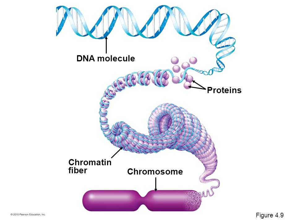 dna and chromatin relationship